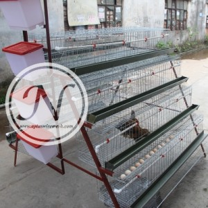 chicken cage (3)